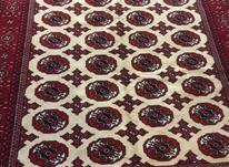 فرش دستباف ترکمن  در شیپور-عکس کوچک