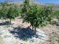 فروش خاک زئولیت ویژه چالکود نهال و درخت در شیپور-عکس کوچک