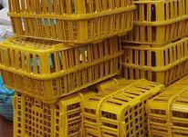 سبد حمل مرغ زنده چیلک در شیپور-عکس کوچک