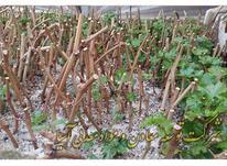 خاک پرلیت ویژه گلخانه و پرورش گل و گیاه و هیدروپونیک در شیپور-عکس کوچک