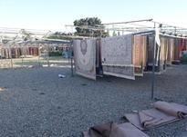 کارخانه قالیشویی و مبل شویی مجاز  پارسا عبدی  در شیپور-عکس کوچک