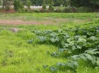 زمین  مسکونی جوازدار در منطقه ویژه در شیپور-عکس کوچک