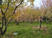 زمین کشاورزی 400 متری در شهریار در شیپور-عکس کوچک
