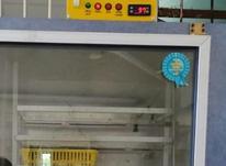 فروش دستگاه جوجه کشی کاکس در شیپور-عکس کوچک