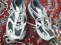 کفش ورزشی اسپالدینگ در شیپور-عکس کوچک