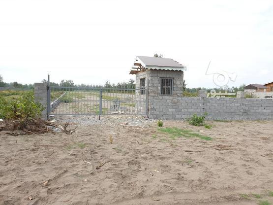 زمینهای ساحلی 350 متری شهرک پارادایس در گروه خرید و فروش املاک در گیلان در شیپور-عکس1