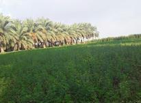 خریدار 5هکتار زمین کشاورزی در شیپور-عکس کوچک