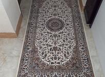 قالیچه نونونو در شیپور-عکس کوچک