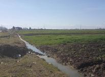 فروش زمین کشاورزی 4000 متر در جویبار جاده چپکرود در شیپور-عکس کوچک