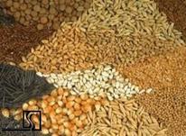 سبوس گندم پوست نخود و کنسانتره و.. خوراک دام در شیپور-عکس کوچک