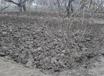 باغ و باغچه در شیپور-عکس کوچک