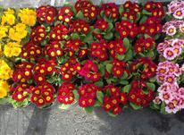 باغبانی هرس کردن در شیپور-عکس کوچک