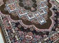 فرش نگین تابان در شیپور-عکس کوچک