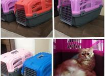 باکس سگ گربه رنگبندی آکبند سایز3 در شیپور-عکس کوچک