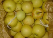 سیب درختی زرد و قرمز در شیپور-عکس کوچک