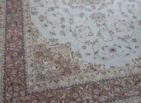 فرش 9 متری تمیز در شیپور-عکس کوچک