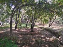 زمین کشاورزی 390متر در شهریار در شیپور-عکس کوچک