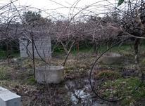 فروش زمین مناسب قطعه 6000 متر در تنکابن در شیپور-عکس کوچک