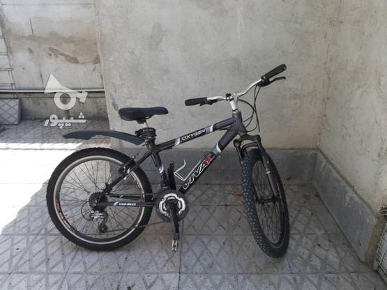 دوچرخه ویوا مدل اکسیژن 24 در گروه خرید و فروش ورزش فرهنگ فراغت در تهران در شیپور-عکس1