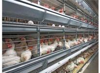قفس مرغ تخمگذار فوری در شیپور-عکس کوچک