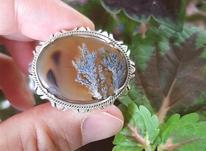 انگشتر شجر در شیپور-عکس کوچک