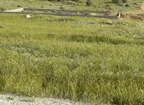 فروش زمین شهر جم- بهارستان در شیپور-عکس کوچک
