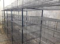 قفس بلدرچین در شیپور-عکس کوچک