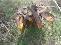 فروش چوب درخت باغی در شیپور-عکس کوچک
