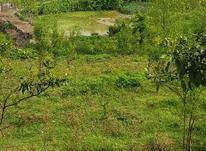 زمین 1000 متری منطقه توریستی تنگ لته  در شیپور-عکس کوچک