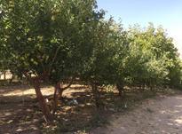 فروش زمین کشاورزی ۶۰۰ متر در دماوند در شیپور-عکس کوچک