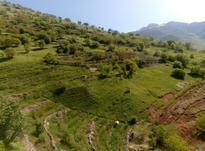 7000زمین وباغ واقع دردوریسان در شیپور-عکس کوچک