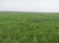 زمین کشاورزی دیم  در شیپور-عکس کوچک
