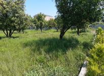 فروش زمین مسکونی 300 متری باغ مرکبات در شیپور-عکس کوچک