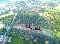 زمین مسکونی ویودار در جاده نظامی قائمشهر در شیپور-عکس کوچک