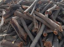 چوب کرت خشک 100تن در شیپور-عکس کوچک