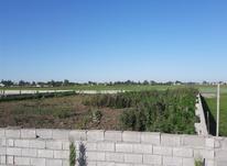 فروش زمین باغ1000مترمحمودآباد در شیپور-عکس کوچک