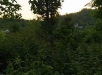 512 متر زمین داخل طرح هادی روستای کوره لاهیجان در شیپور-عکس کوچک