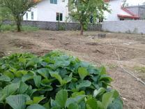 زمین مسکونی 670 متر در رضوانشهر در شیپور