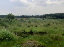 فروش زمین باغی 2500 متر در آمل در شیپور-عکس کوچک