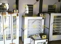 دستگاه جوجه کشی فاخته در شیپور-عکس کوچک