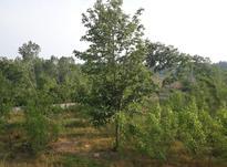 فروش باغ 2500 متر در آمل نزدیک جنگل در شیپور-عکس کوچک