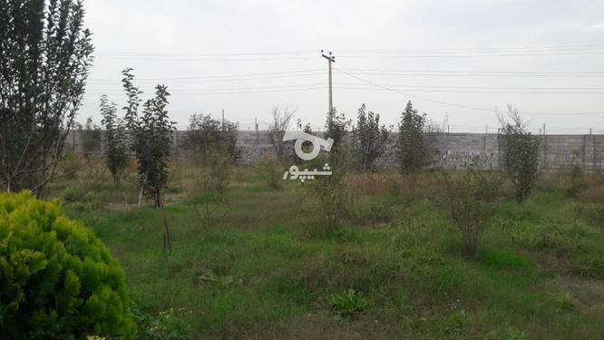 فروش باغ 3000 متر در آمل در گروه خرید و فروش املاک در مازندران در شیپور-عکس1