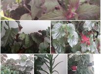 تعدادی گل وگلدان زیبا در شیپور-عکس کوچک