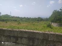 فروش زمین مسکونی 1000 متر در رامسر در شیپور-عکس کوچک