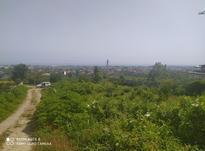 زمین مسکونی 1800 متر در رامسر در شیپور-عکس کوچک