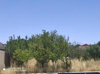 فروش زمین کشاورزی 1500 متر در سهیلیه - زعفرانیه در شیپور-عکس کوچک