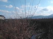 زمین بهترین جای مازندران  در شیپور-عکس کوچک