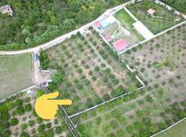 زمین2500متری در فاصله 100 متری از جاده نظامی در شیپور-عکس کوچک