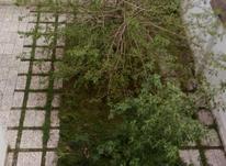 145 متر زعفرانیه - شیرکوه در شیپور-عکس کوچک