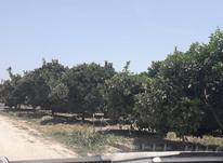 فروش زمین 2000 متر آبمال در شیپور-عکس کوچک
